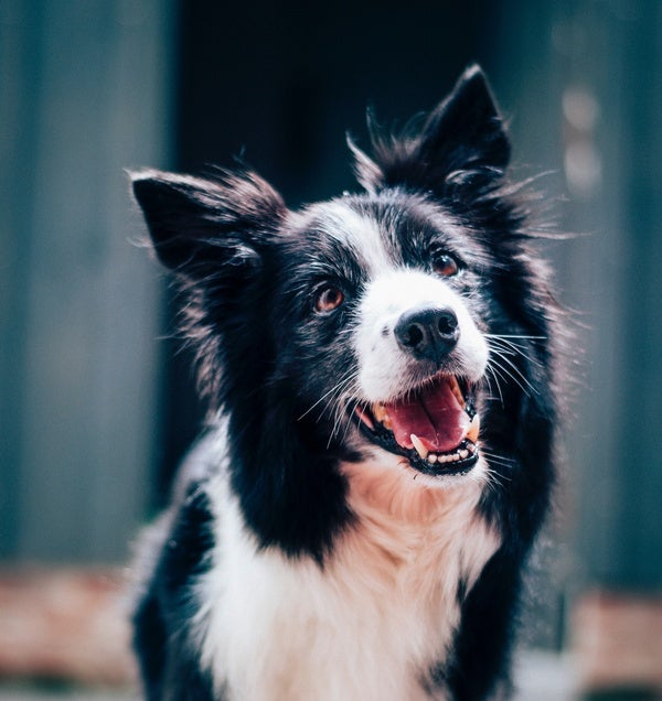 How Much Are Dogs Influenced by Local Culture?