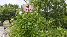 How Invasive Species (Slowly) Push Plants toward Extinction