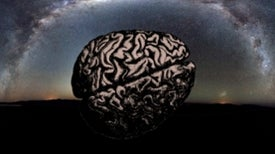 500-Million-Year-Old Brains and Life in the Universe