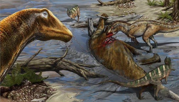 "Paleo Profile: The ""Need Helmet"" Dinosaur"