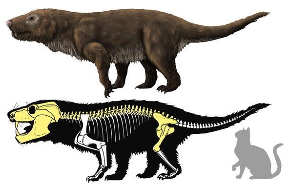 Paleo Profile: Crompton's Aleodon
