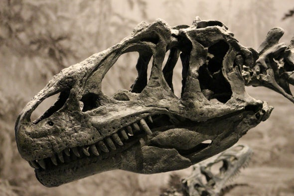 <i>Allosaurus</i> Had an Amazing Gape