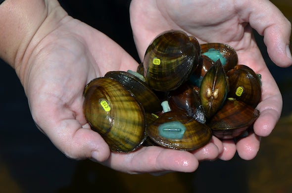 America's Freshwater Mussels Are Going Extinct--Here's Why That Sucks