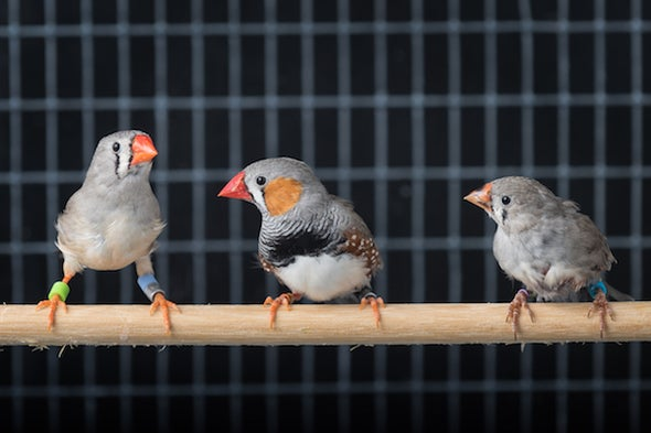 A Bird's-Eye View of Communication