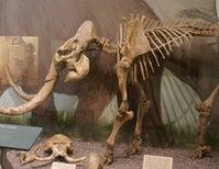 The Making of California's Mini-Mammoths