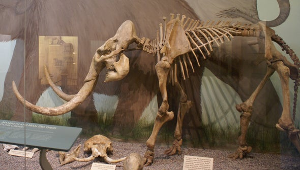 The Making of California's Mini-Mammoths