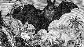 Halloween Horrors: The Spectral Vampire Bat