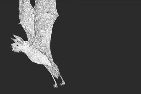 Fossil Bat Stories, Part 3: Bulldog Bats