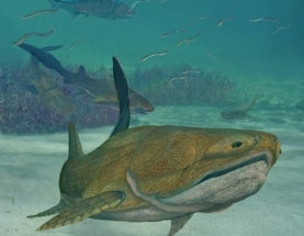How Fossil Fish Make Front-Page News