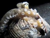 Eight Great Octopus Videos!