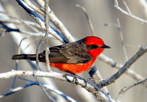 First Bird Extinction in the Galápagos Islands Confirmed