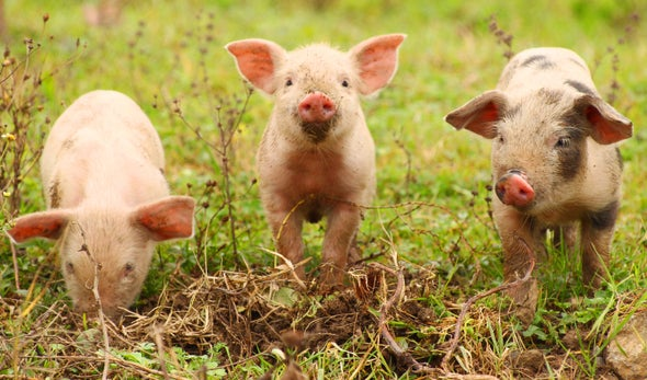 The Three Little Pigs and Climate Change