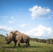 Conservation Predictions for 2017