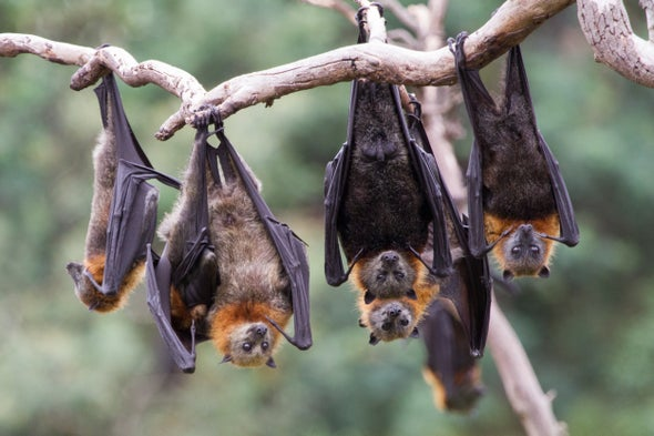 Bats Are Not Our Enemies