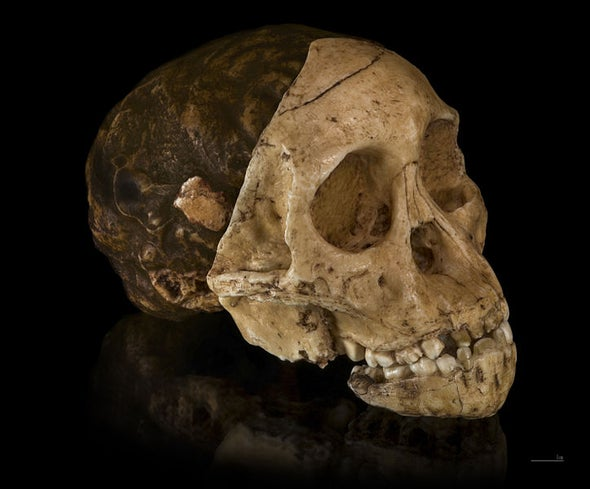 Lee Berger, the Death of Taung Child and My Run-In with a Raptor