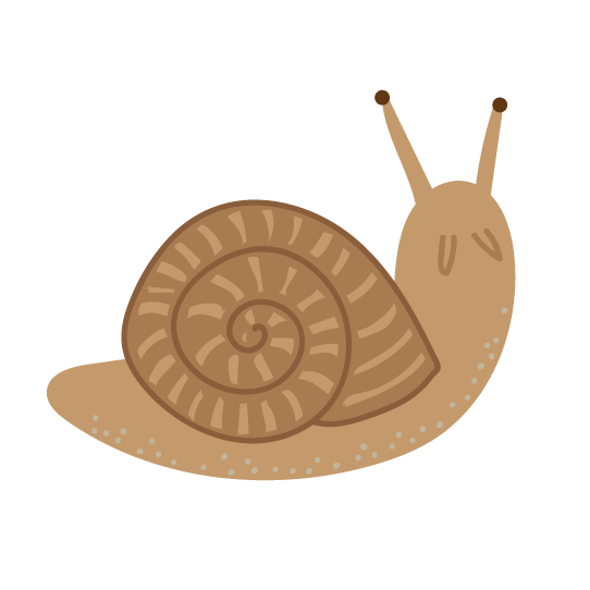 Escaped Escargot