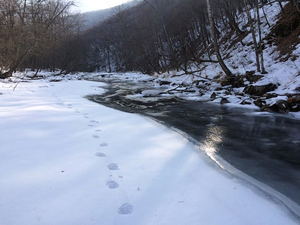 East of Siberia: Walking Rivers with Tigers