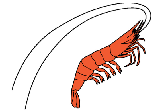 The Rise and Fall of a Shrimp Biologist