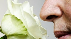 Loss of Smell in COVID-19 Can Present with Brain Alterations