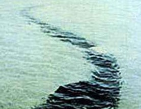 The amazing Hook Island sea monster photos, revisited