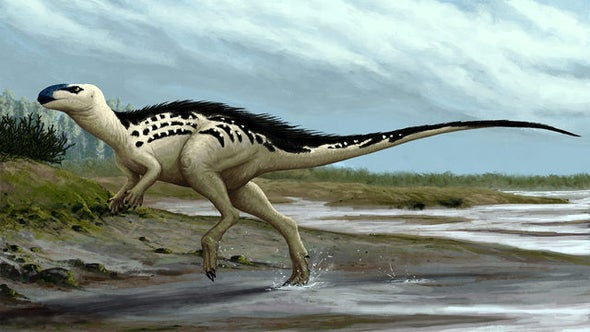 Paleo Profile: Burian's Lizard