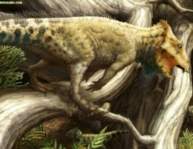 Tiny Fossil Is North America's Oldest (and Cutest) Horned Dinosaur