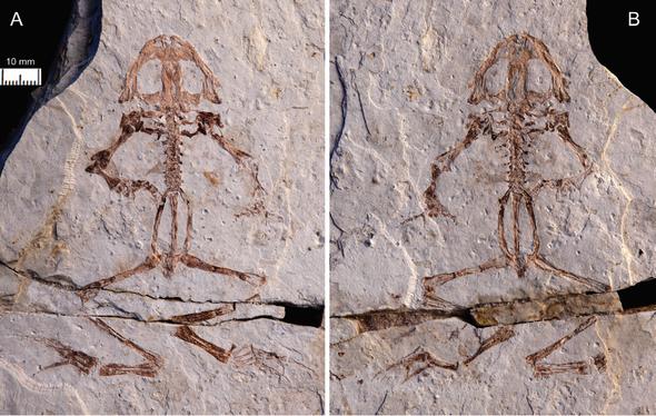 Paleo Profile: The Geni River Frog