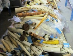 U.S. to Destroy 6 Tons of Confiscated Ivory, Sending Message to Poachers