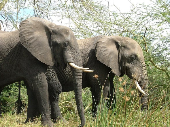 Elephants, Pangolins, Bees Proposed for Greater Endangered Species Protections