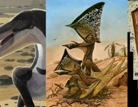 2014, an amazing year for pterosaurs