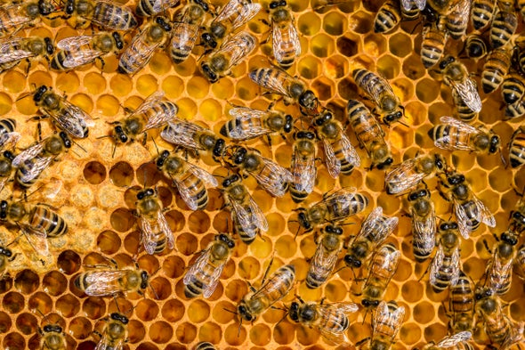 Honey Bees Are Struggling with Their Own Pandemic