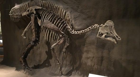 The Secret to Dinosaur Hip Shape