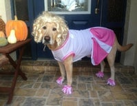 Three Ways Dogs Fail At Halloween