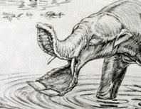 Shovel-Tusker Was Actually a Saw-Tusker