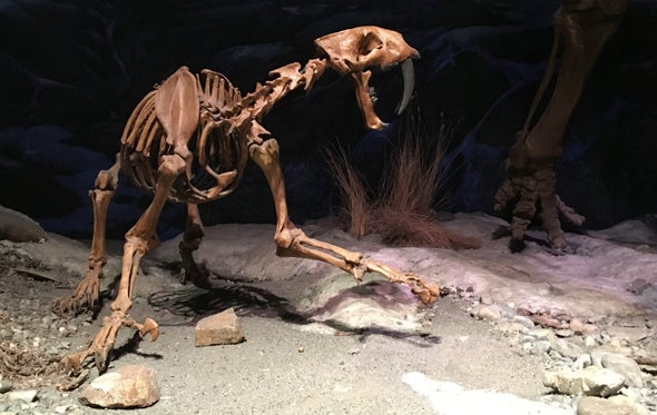 Canada Gets Its First Smilodon