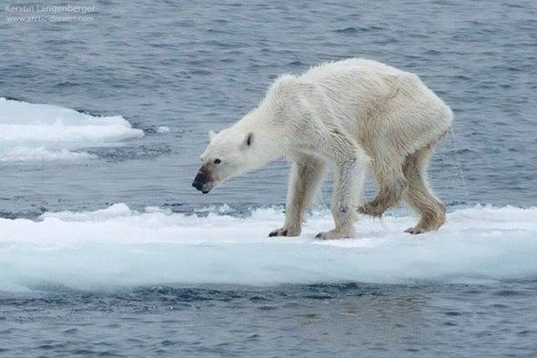 The Polar Bear Photo Seen around the World