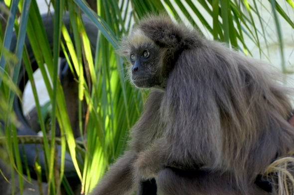 Fractured Monkeys