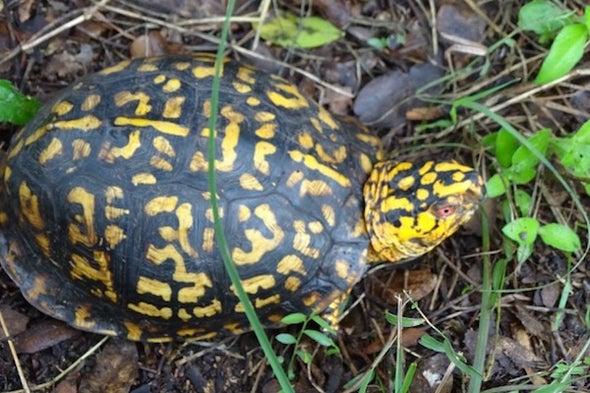 We Are All Tortoises