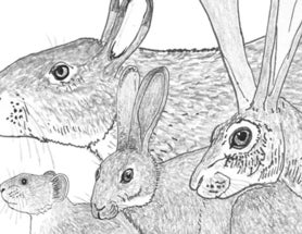News from the World of Rabbits