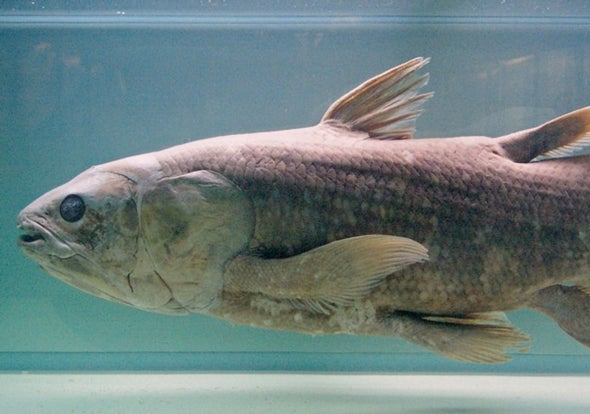 "Coelacanth, the Famous ""Living Fossil"" Fish, Gets Endangered Species Act Protection"