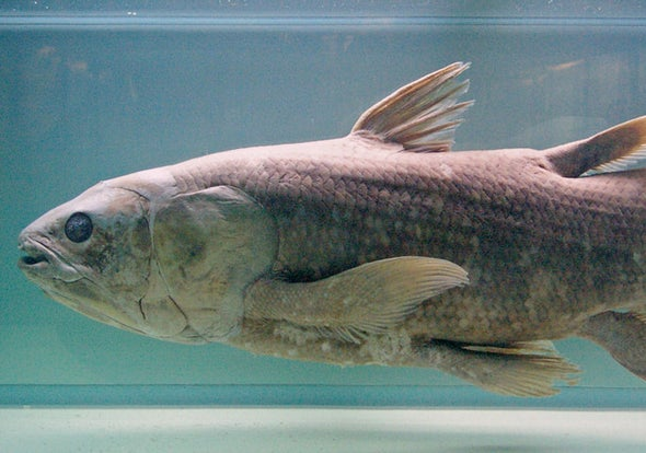 """Coelacanth, the Famous """"Living Fossil"""" Fish, Gets Endangered Species Act Protection"""