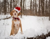 The Best Books for Dog Lovers