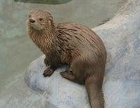 Paleo Profile: Bob Weir's Otter