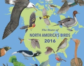 Here's a List of Every at-Risk Bird Species in North America (All 432 of Them)