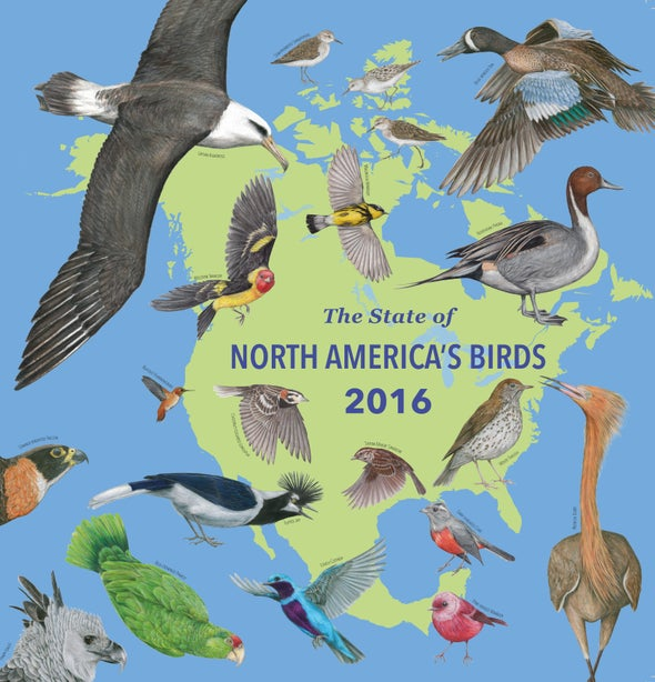 Here S A List Of Every At Risk Bird Species In North America All 432