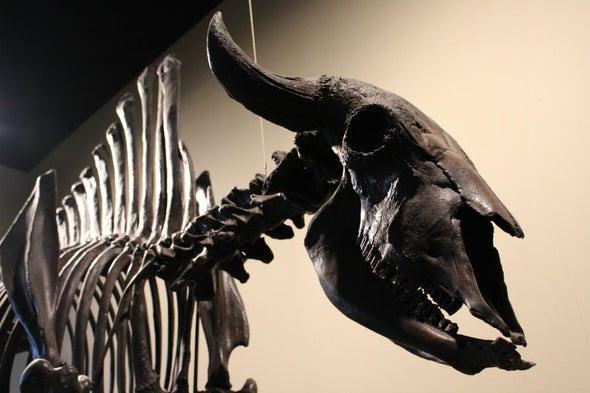 Ice Age Megafauna Were Ecosystem Engineers