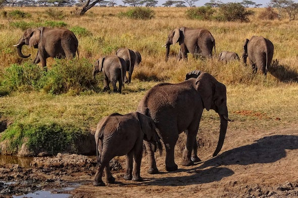 The True Cost of a Dead Elephant
