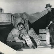 Why 76 Beavers Were Forced to Skydive into the Idaho Wilderness in 1948
