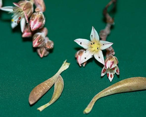 Meet the Endangered Plant Named after Rock Legend Jimi Hendrix