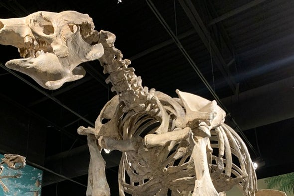 Paleontologists Dig Into a Giant Sloth Boneyard